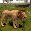 Wild Life: Lion